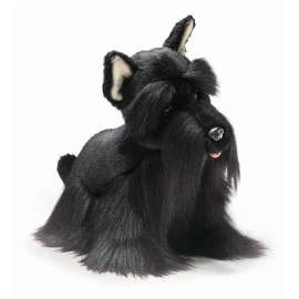 SCOTTISH TERRIER-YOMIKO